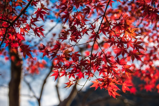 [登山・東京]関東百名山 御岳山-日の出山 20.11.15 sun.