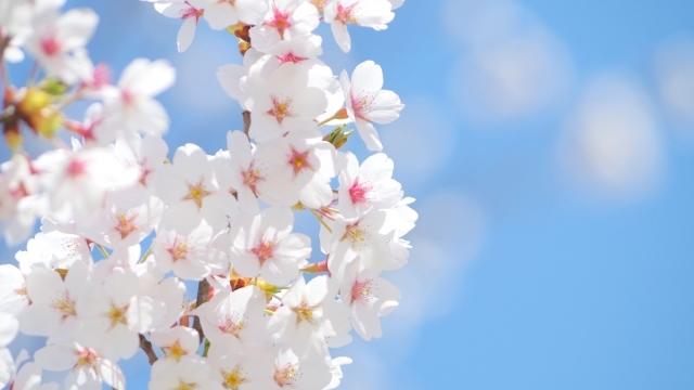 [Trail Walk・神奈川]お花見トレイルウォーク 弘法山-高取山 21.03.28 sun.