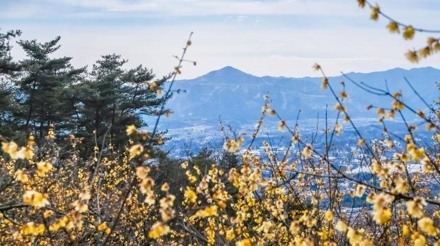 [Trail Walk・埼玉]お花見トレイルウォーク 長瀞アルプス・宝登山 21.02.21 sun.