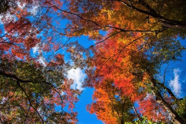[登山・東京]紅葉の関東百名山 御岳山‐大岳山 2021年11月21日(日)